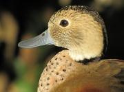 28th Dec 2010 - Quack