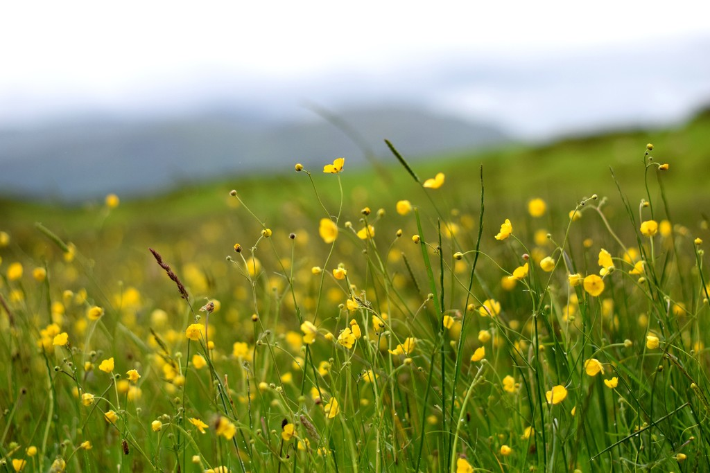 yellow and green by christophercox
