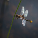 Dragonfly Has a Story to Tell