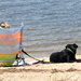 My town has a no dogs on beaches law.............