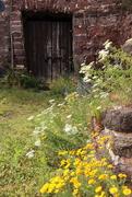 27th Jun 2017 - Wild flowers among the ruins