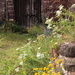 Wild flowers among the ruins by busylady