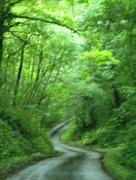 29th Jun 2017 - A walk in the green, green woods...