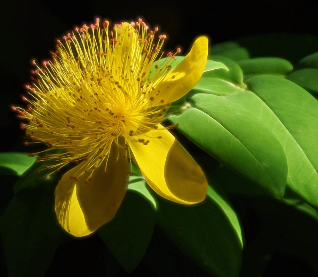 Summer Blossom by joysfocus