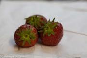 24th Jun 2017 - Home grown strawberries