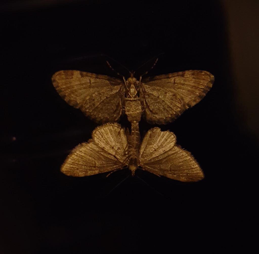 Moth romance... by m2016