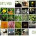 30 Days Wild 2017
