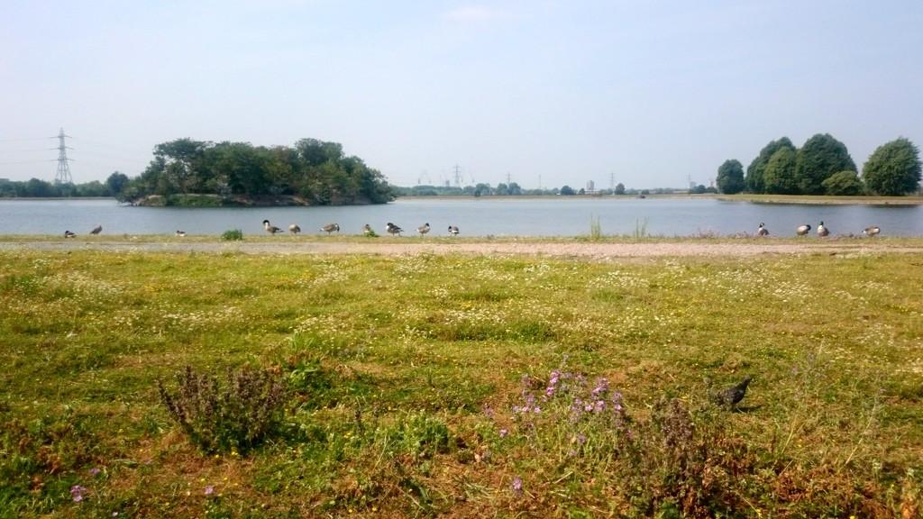30 Days Wild - Day 21: Walthamstow Wetlands by boxplayer