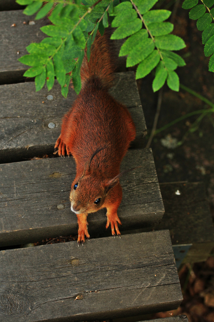 Got something for me? A nut perhaps? Are you sure you got Nothing? Even If I stare long enough? by susale