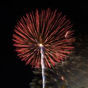3rd Jul 2017 - fire dandelion