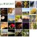 30dayswild2017 Collage