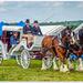 Wedding Landau And Shire Horses