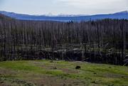 4th Jul 2017 - Yellowstone Skyline