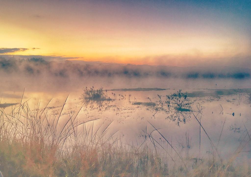 Misty Morning  by zambianlass