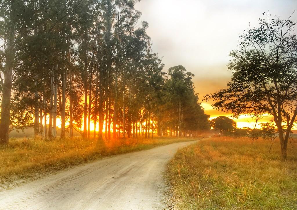 Follow the Road by zambianlass