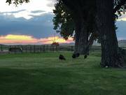 5th Jul 2017 - Wyoming Sunrise Skyline