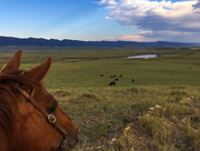 6th Jul 2017 - Wyoming Cattle Country Skyline