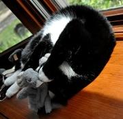 "6th Jul 2017 - "" I love my squirrel."""