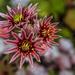 Succulent by tonygig