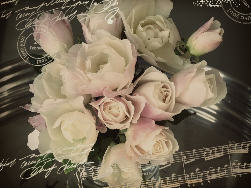 A different take on my roses...... by ludwigsdiana