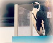 8th Jul 2017 - Penguin in a Box