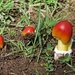 Mushrooms-LHG_8940
