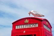 5th Jul 2017 - Coastal Telephone Box