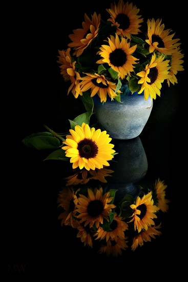2017-07-10 Plan B: sunflowers for the behind the scene shot by mona65