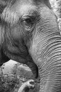 10th Jul 2017 - Elephant
