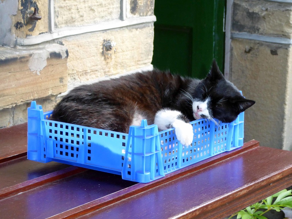 Let sleeping cats lie! by cmp