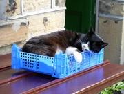 11th Jul 2017 - Let sleeping cats lie!