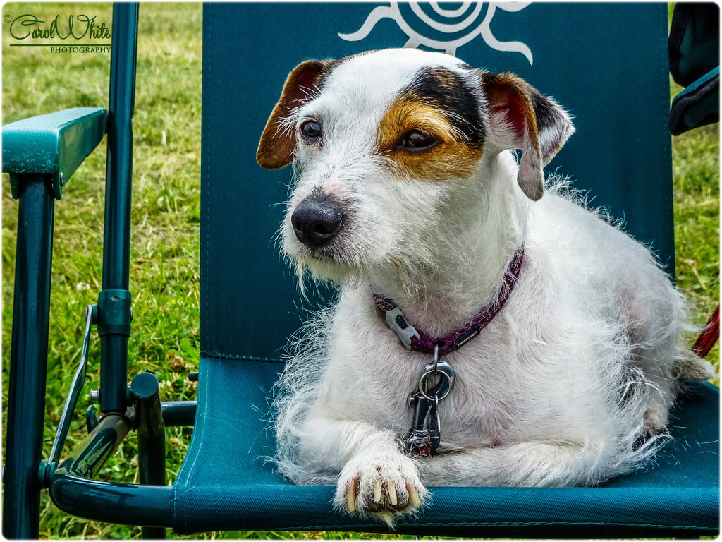 Daisy's Day Out by carolmw