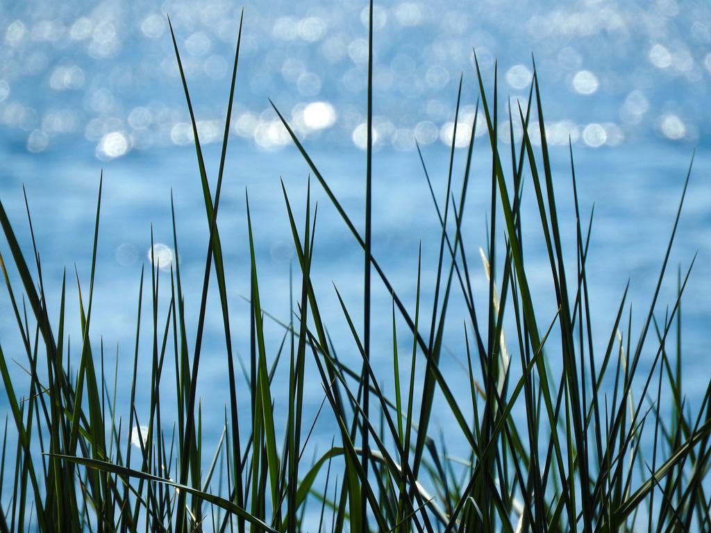 Puget Sound  by seattlite