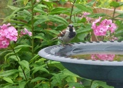 13th Jul 2017 - I'm only a poor little sparrow !!!