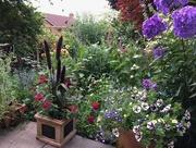 13th Jul 2017 - The Back Garden