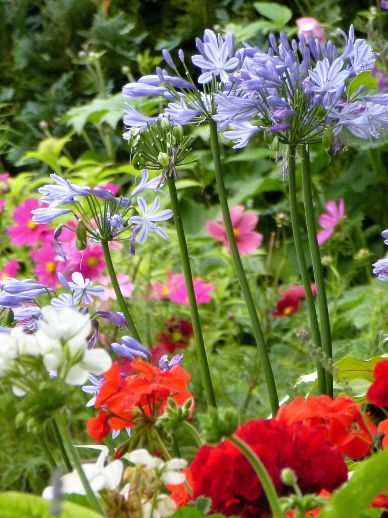 Flowers in the garden...... by snowy