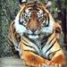 Tiger Feet by yorkshirekiwi