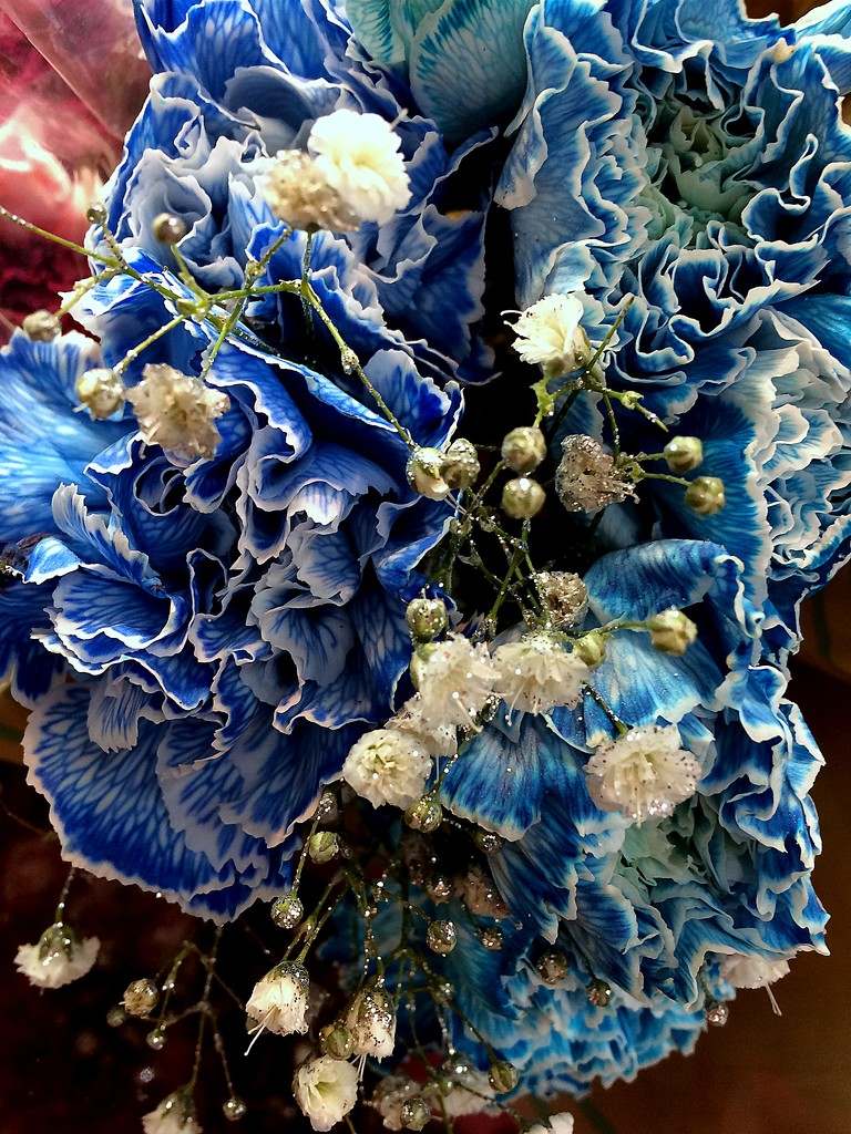 Blue carnations by homeschoolmom
