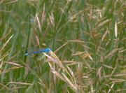 10th Jul 2017 - Dragonfly