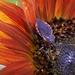 Bees Demise-LHG_9064