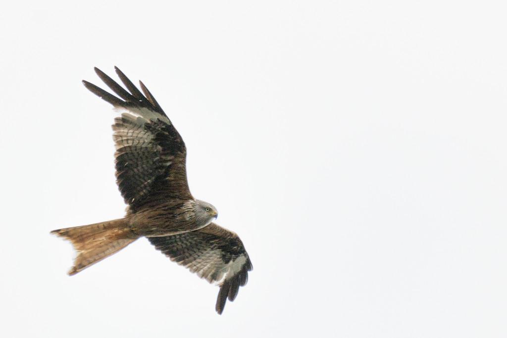 2017 07 15 - Kite by pixiemac