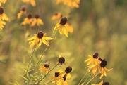 14th Jul 2017 - Wildflowers