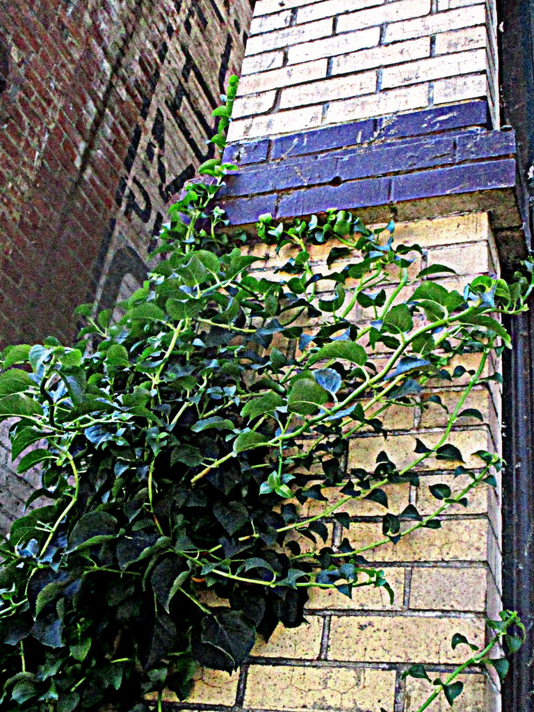 vine and brick by granagringa