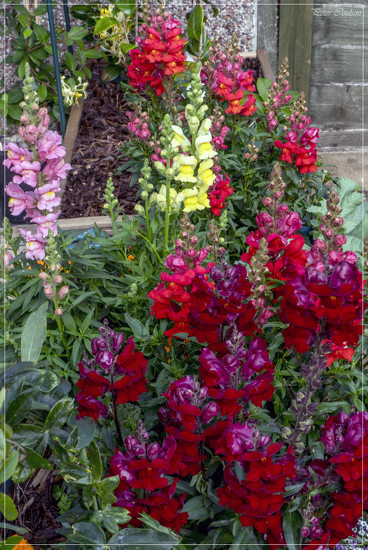 Garden Colour by pcoulson