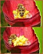 18th Jul 2017 - Busy little bee.............