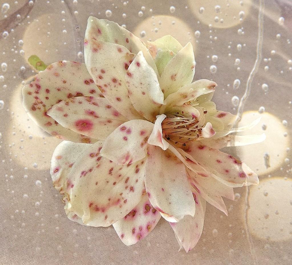 Rusty rose.......... by ludwigsdiana
