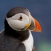 PUFFIN PORTRAIT by markp