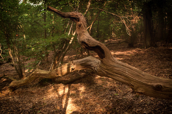 Twisted trunk by fbailey