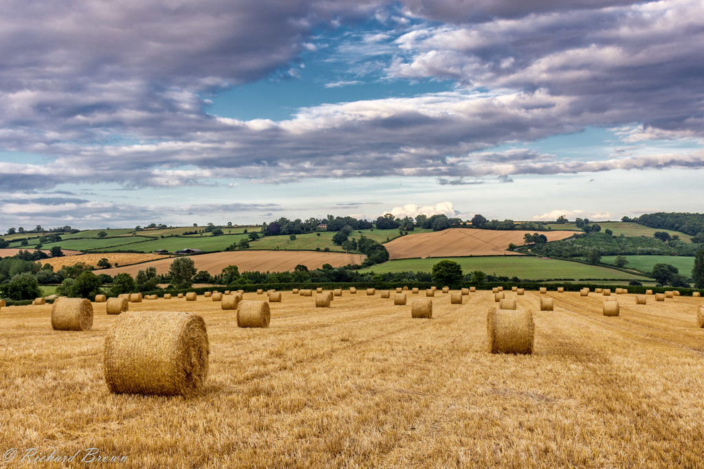 Bales are back by rjb71
