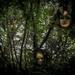Faerie Paths by swillinbillyflynn